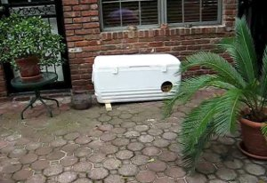Ultimate Feral Cat Shelter