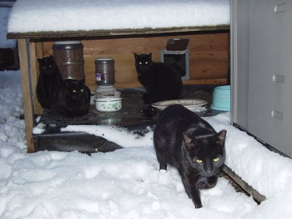 winter cat shelters for feral cats urbancatleague cat shelters 425x319